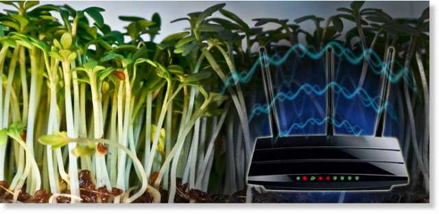 Ninth graders' science experiment stirs up scientific community when it finds plants won't grow near Wi-Fi router 3