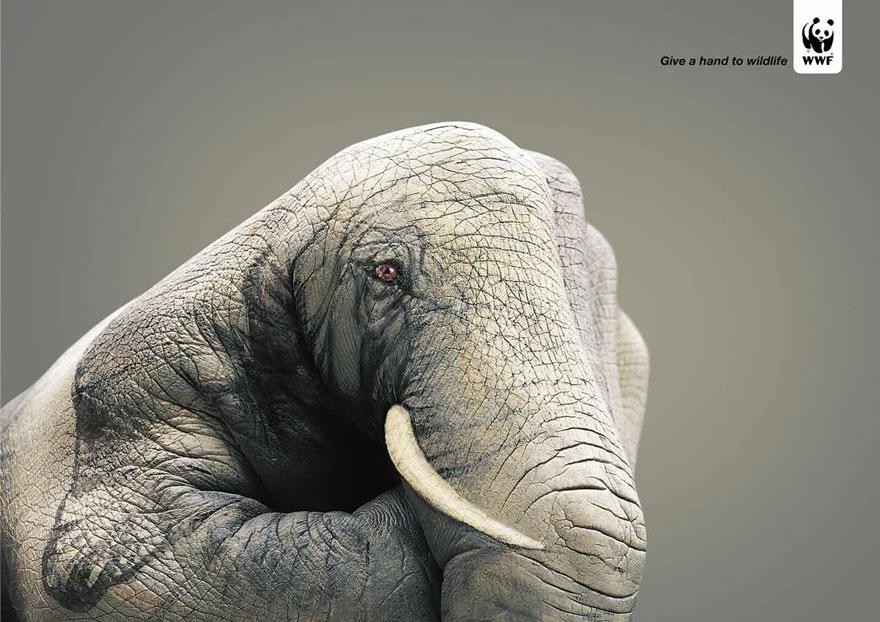 public-social-ads-animals-13