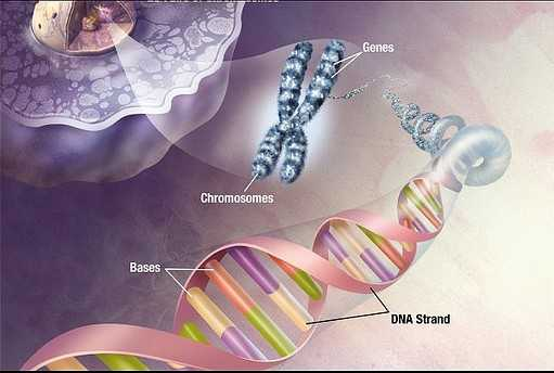 Is the Human Race Evolving to Have Three Strands of DNA? 26