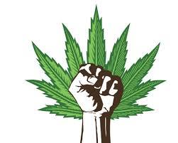 The Cannabis Conspiracy 10