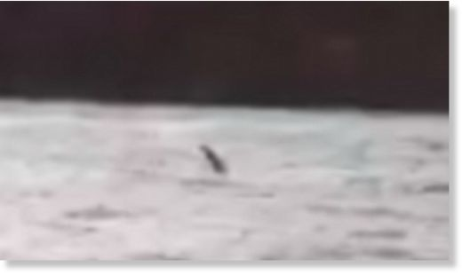 Has Nessie finally been caught on video? Footage seems to show monster's head and neck emerging from Loch Ness water  91