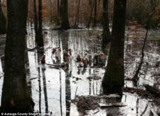 Twenty-one porcelain dolls on bamboo stakes found in Alabama swamp, some missing heads  93