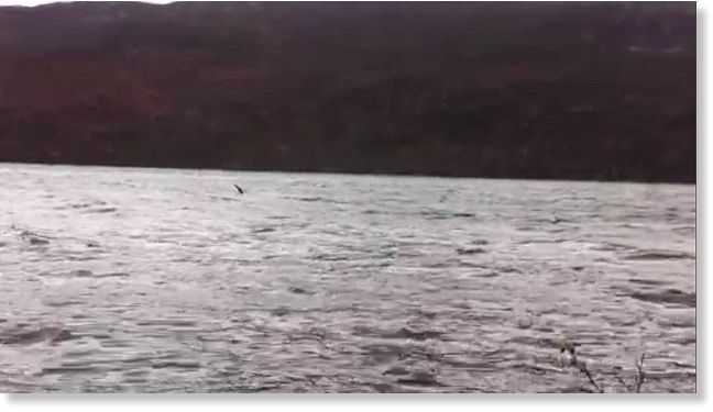 Has Nessie finally been caught on video? Footage seems to show monster's head and neck emerging from Loch Ness water  96