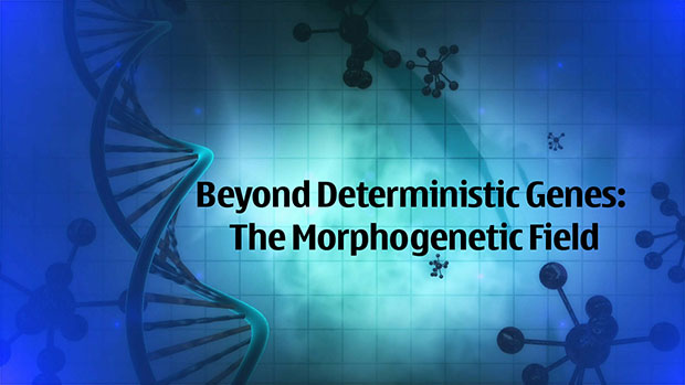 Beyond Deterministic Genes: The Morphogenetic Field 86