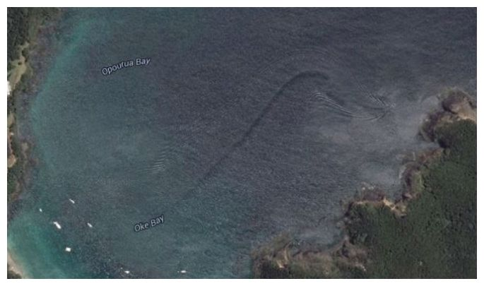Mystery sea creature on Google Earth: Unexplained discovery in New Zealand's waters 53