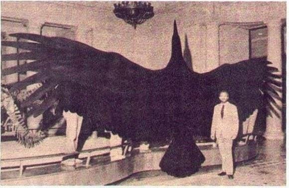The 'Alien Bird' that Terrified Australia 1