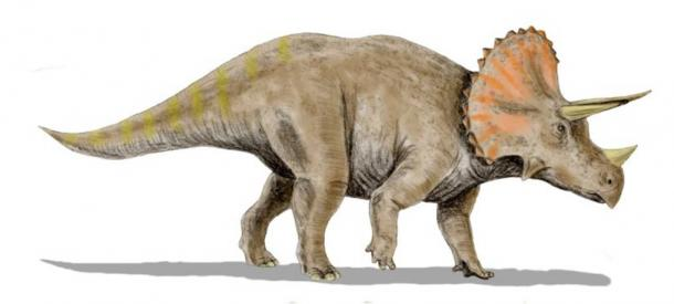 Classical-reconstruction-of-a-Triceratops