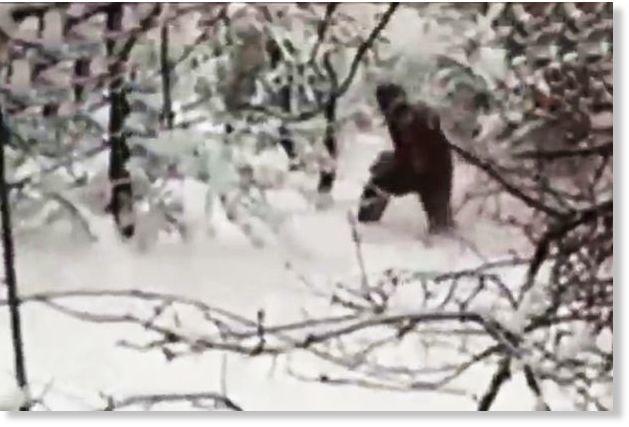 Proof of bigfoot? New 'yeti' video shows giant hairy beast walking through Russian forest 24