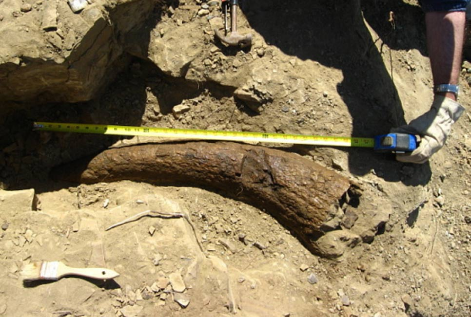 Did Humans Walk the Earth With Dinosaurs? Triceratops Horn Dated To 33,500 Years 35