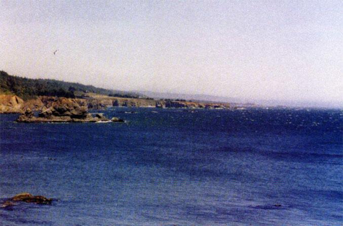 Anchor Bay, California, where a 40-pound octopus was found attacking crab traps