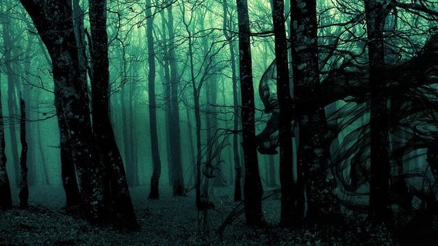 The World's 7 Most Haunted Forests Will Make You Never Try Camping Again 100