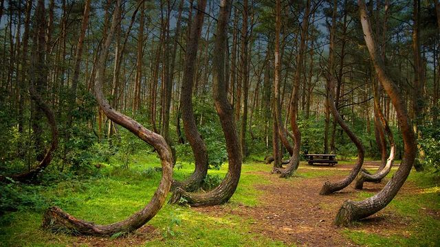 The World's 7 Most Haunted Forests Will Make You Never Try Camping Again 106