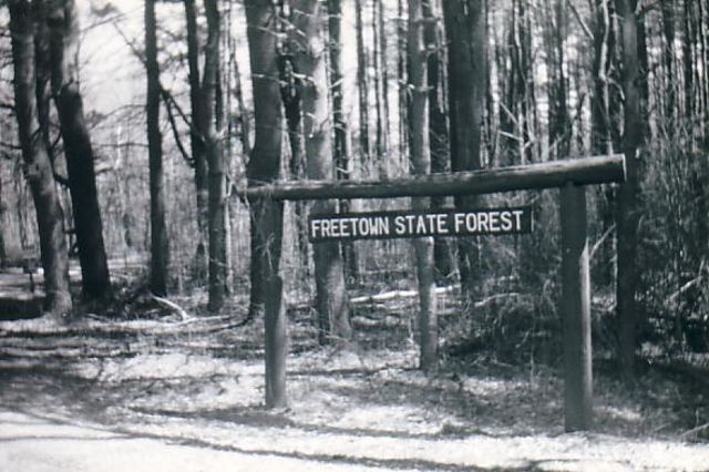 The World's 7 Most Haunted Forests Will Make You Never Try Camping Again 104