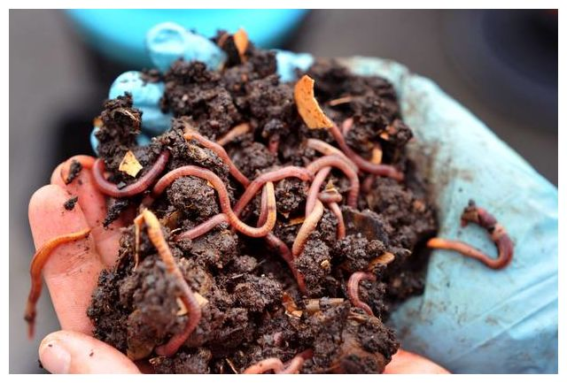 Earthworms rain down from skies over Norway, puzzling scientists 10