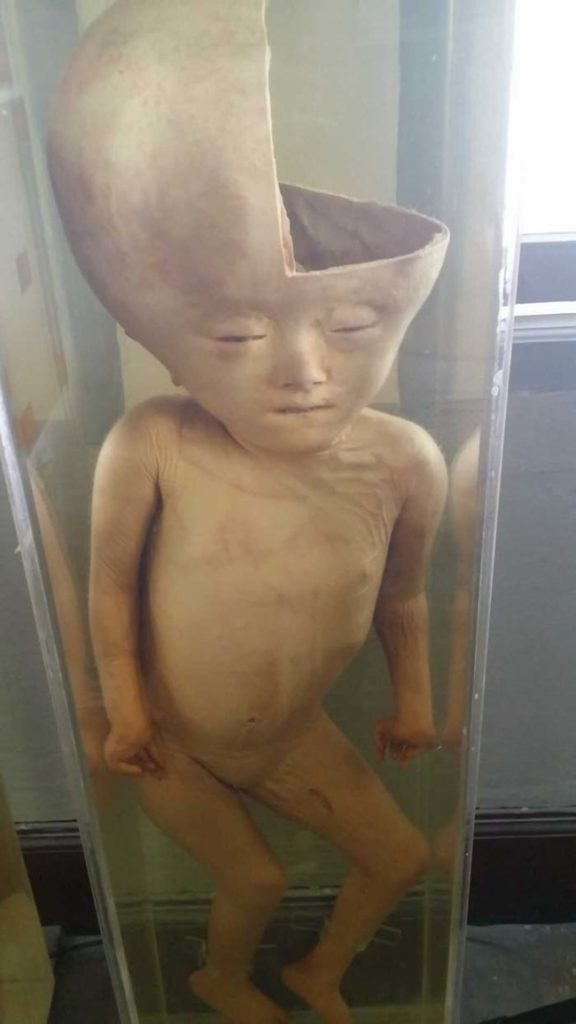 What's Hiding In This Innocent-Looking Museum In Thailand Is Seriously Freaky 37