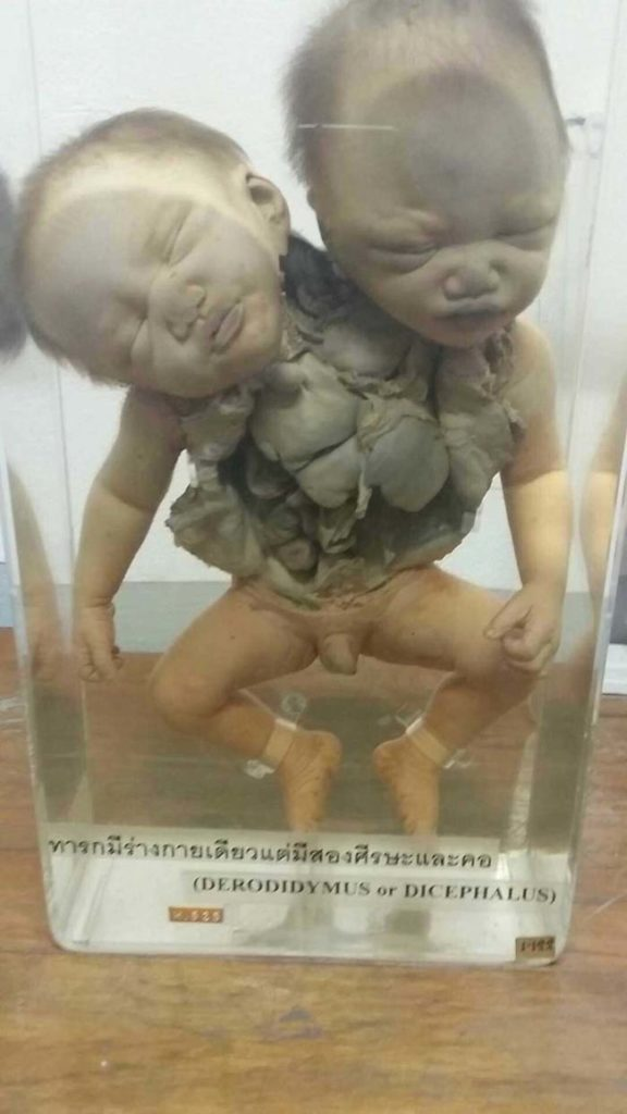 What's Hiding In This Innocent-Looking Museum In Thailand Is Seriously Freaky 35