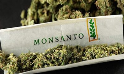 Monsanto And Bayer Are Maneuvering to Take Over the Cannabis Industry 105