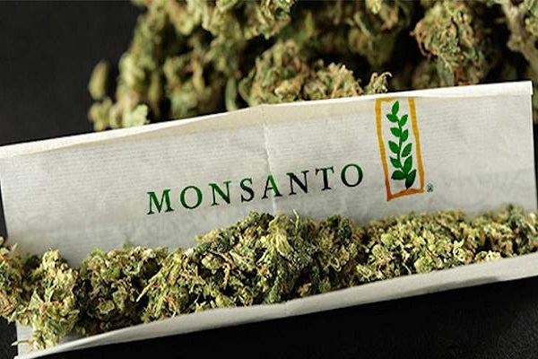 Monsanto And Bayer Are Maneuvering to Take Over the Cannabis Industry 1