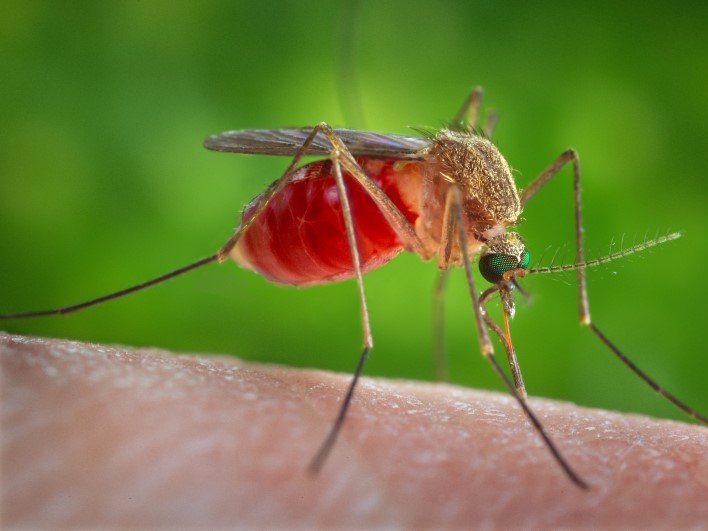 1. Mosquitoes: 750,000 deaths a year