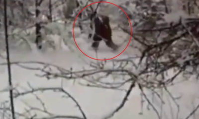 Russians Claim 'Indisputable Proof' of Yeti 93