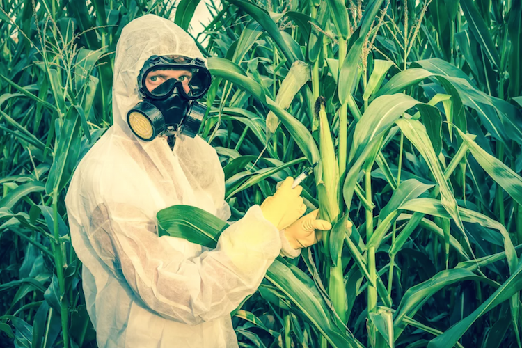 Newsweek Hit Piece Calling Organic Food a 'Scam' Authored by Known Monsanto Propagandist 25