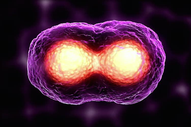Cancer: Busting the Myths - The Mysterious Cancer Microbe 8