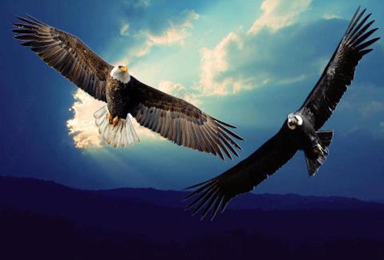 The Dying Prophecy of the Eagle and the Condor 5
