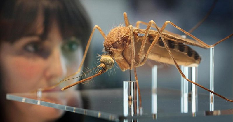 Research Exposes New Health Risks of Genetically Modified Mosquitoes & Salmon 4