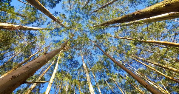 In Extreme Heat, Trees Stop Sucking Carbon From the Air 1