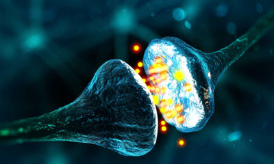 Memories in the Human Brain Could Soon be Manipulated by Scientists 97