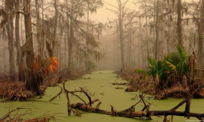 Manchac -The Ghost Swamp of New Orleans 92