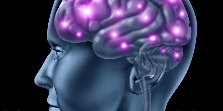 Brain_Man_Model