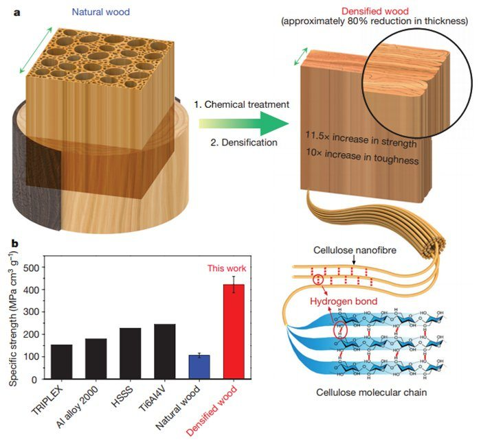 Scientists Have Developed a Way to Make Wood as Strong as Steel 86