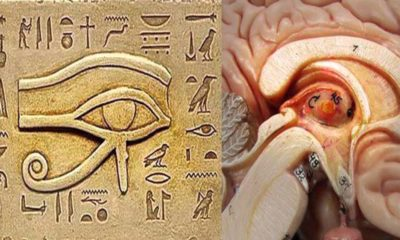 One Of The Biggest Secrets Kept From Humanity 87