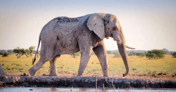 US Quietly Allows Import of Some Elephant Trophies 86