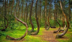20 Mystery Facts about The Haunted Forest of Hoia Baciu - Transylvania's Bermuda Triangle 97