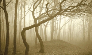 20 Mystery Facts about The Haunted Forest of Hoia Baciu - Transylvania's Bermuda Triangle 98