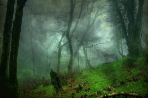 20 Mystery Facts about The Haunted Forest of Hoia Baciu - Transylvania's Bermuda Triangle 100