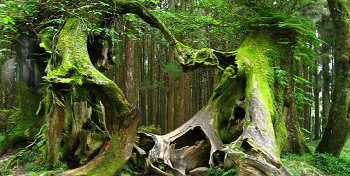 20 Mystery Facts about The Haunted Forest of Hoia Baciu - Transylvania's Bermuda Triangle 96