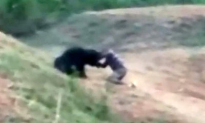 Indian man 'trying to take selfie with bear' mauled to death 87