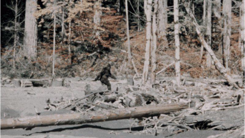 Bigfoot: The 10 most convincing sightings? 21