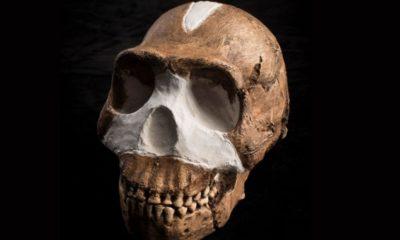 Homo Naledi, Newly Discovered Species 93