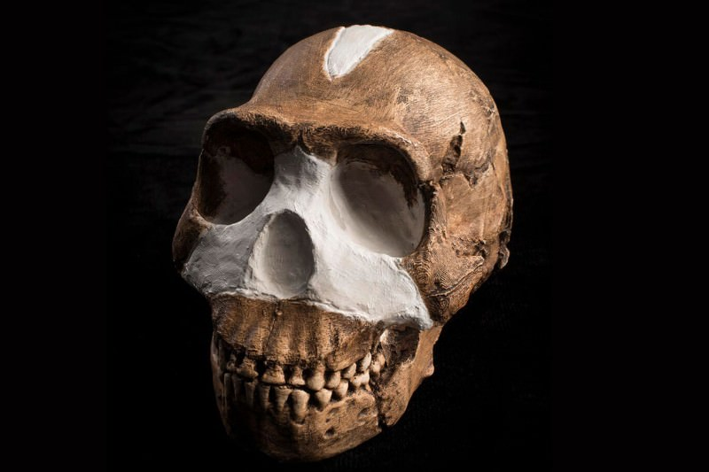 Homo Naledi, Newly Discovered Species 14