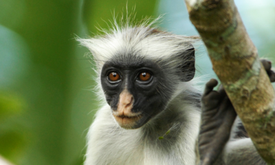 New Facial Recognition Software Tracks and Protects Endangered Primates 92