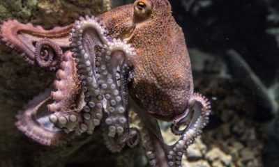 New Research on the Theory that Octopuses are Aliens 87