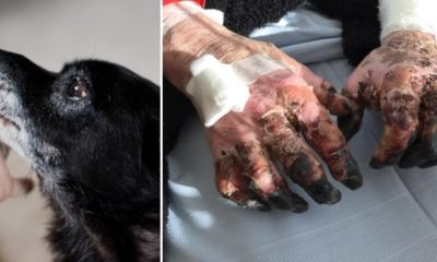 Never Ever Let Your Dog Lick You! Here's Why 95