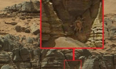 Curiosity Rover Caught An Image Of Mysterious Creature On Red Planet's Surface 97