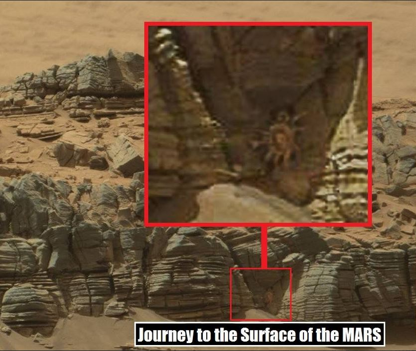 Curiosity Rover Caught An Image Of Mysterious Creature On Red Planet's Surface 86