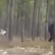 Massive Black 'Dire Wolf' Chases Dog - Who created this HUGE Creature? 94