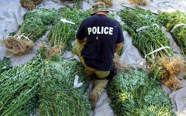 Why Has Marijuana Been Outlawed? The Real Reasons Are Worse Than You Think… 10